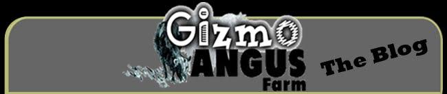 Gizmo Angus Blog