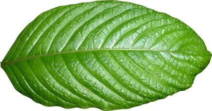 What Is Kratom Used For And How