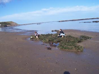 odpływ tego dnia był  bardzo duży, brodziliśmy po wodzie