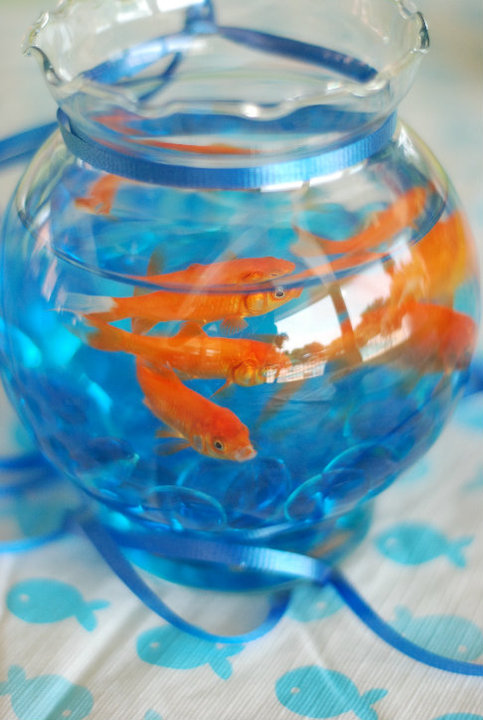 Cake With Live Fish In Bowl