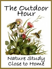 Free weekly nature study ideas & lessons