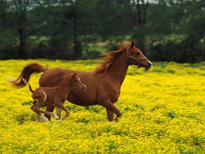 running wallpaper. Horses Running Wallpaper.