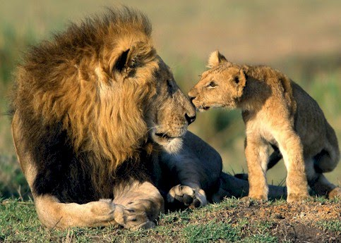 Animal World Usa Top 5 Most Amazing Examples Of Animal Communication