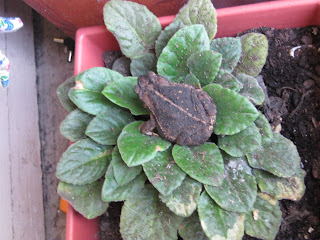 Photograph of toad in plant by Erin Pringle-Toungate
