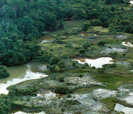 Floresta Estadual de Manicoré