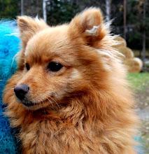 Foxy den livlige