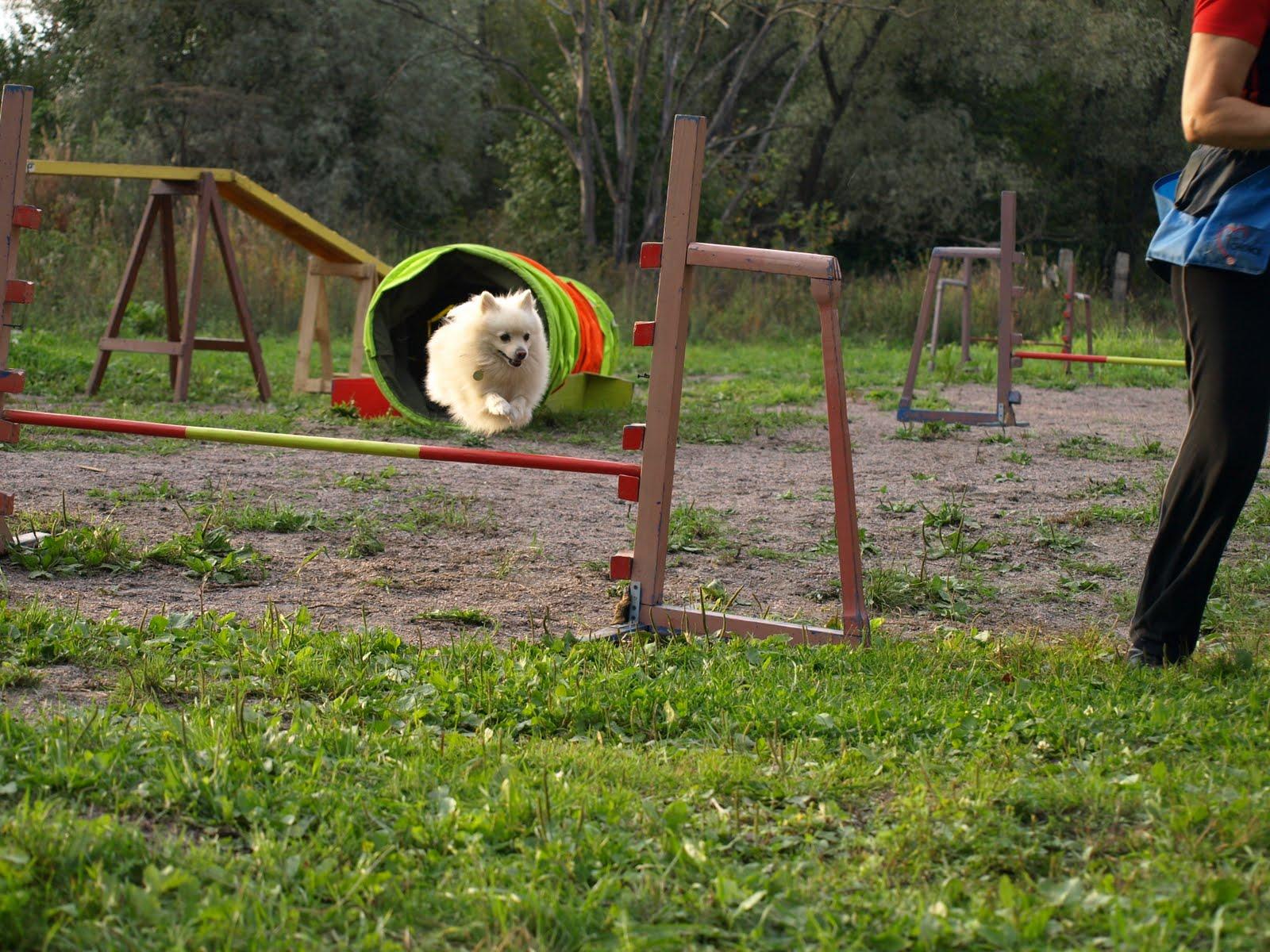 Дрессировка собак в КПЦ 'Сириус'