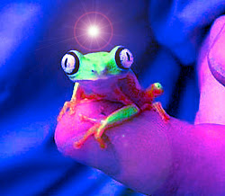 An Illuminated Frog