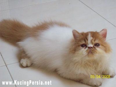 Foto Foto Buka Gambar Foto Blog Tips Merawat Kucing Ang