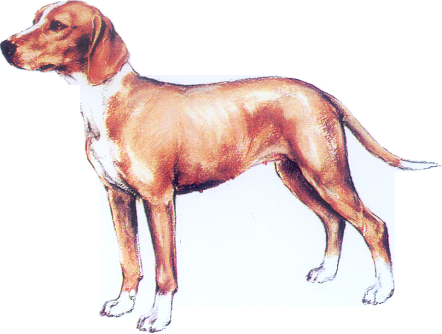 SCENT HOUND FROM THE SAVE VALLEY