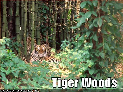 tiger woods funny. The Tiger Woods Soundboard.