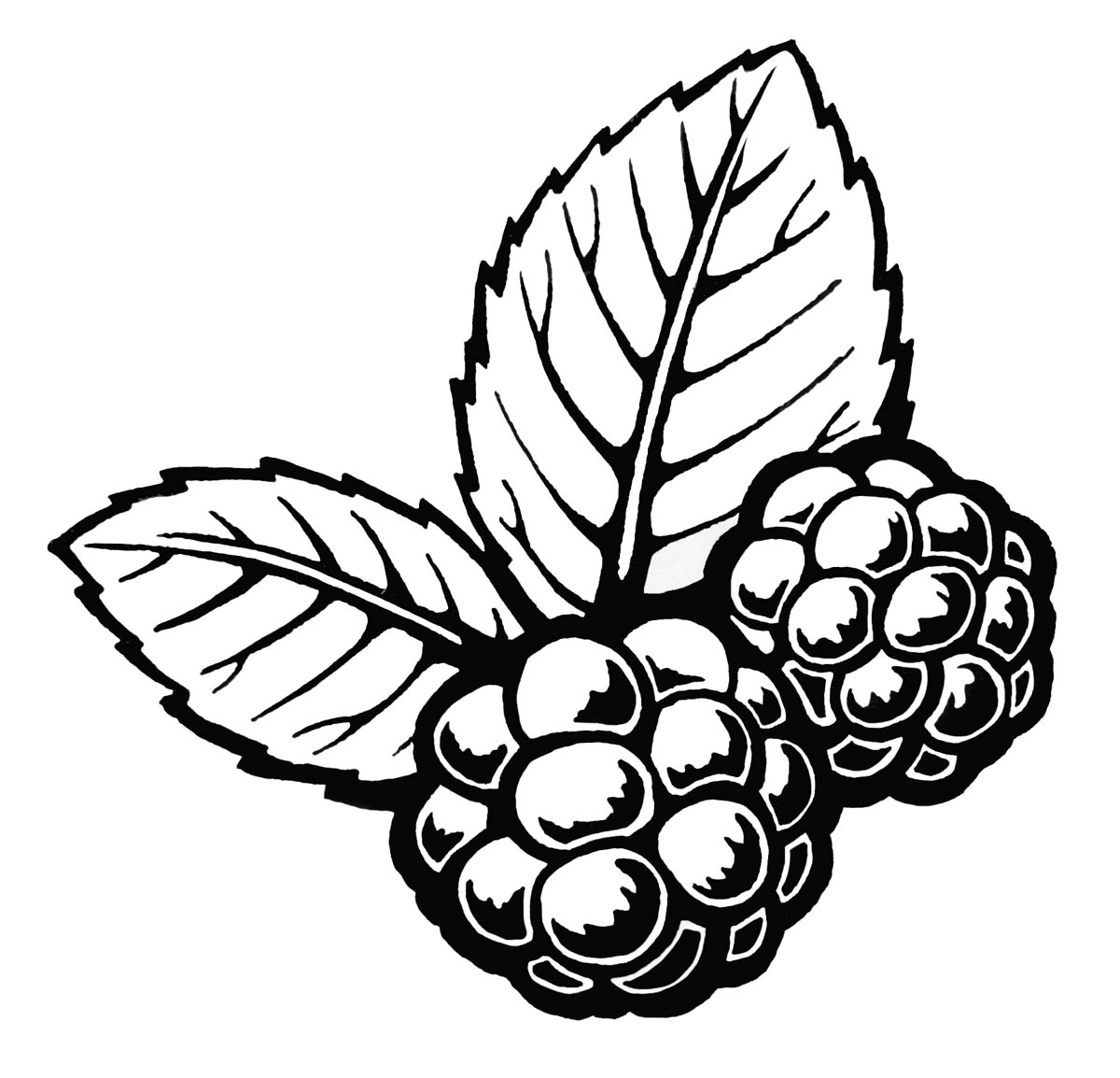 coloring pages blackberries - photo#35