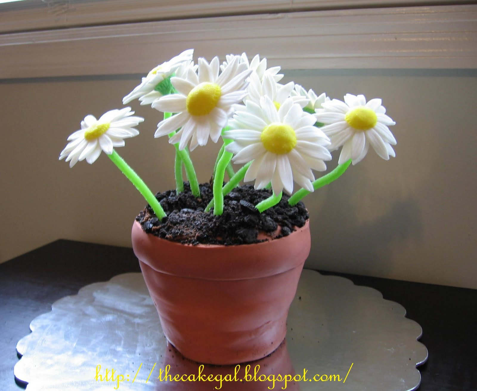 Cakes Daisy Flower Pot Cake
