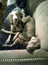 Layla & Faulkner