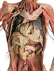 http://3.bp.blogspot.com/_snyK7GlbhbQ/RdTIfHLI7cI/AAAAAAAAAF0/DXBlrQrI-uk/s400/corpo_humano2.jpg