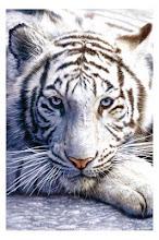 http://3.bp.blogspot.com/_so7PEIx_UbE/S-8a-dRgdaI/AAAAAAAACxU/84alUX1qcTs/S220/Tigre_branco.jpg