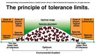 law of tolerance definition