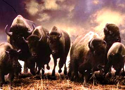 great wyoming buffalo stampede delaware