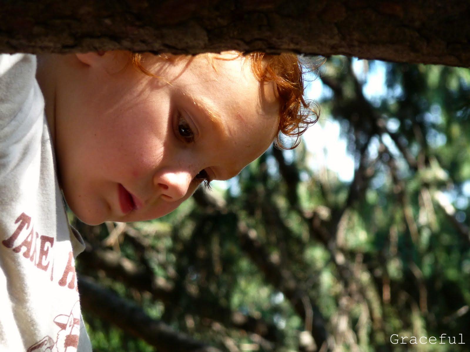 http://3.bp.blogspot.com/_spXlDIKgO5s/TGg1cfLDfOI/AAAAAAAABdk/povEHUAopcU/s1600/rowantree.jpg