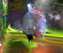 Herbie, our fish.