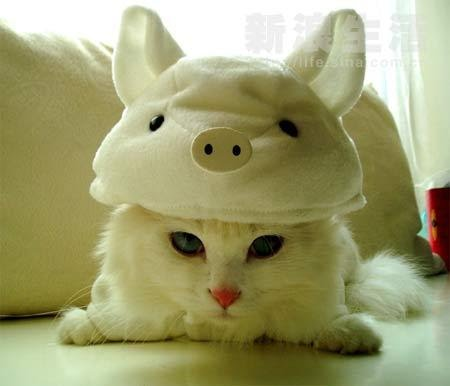 Piggy Kitty