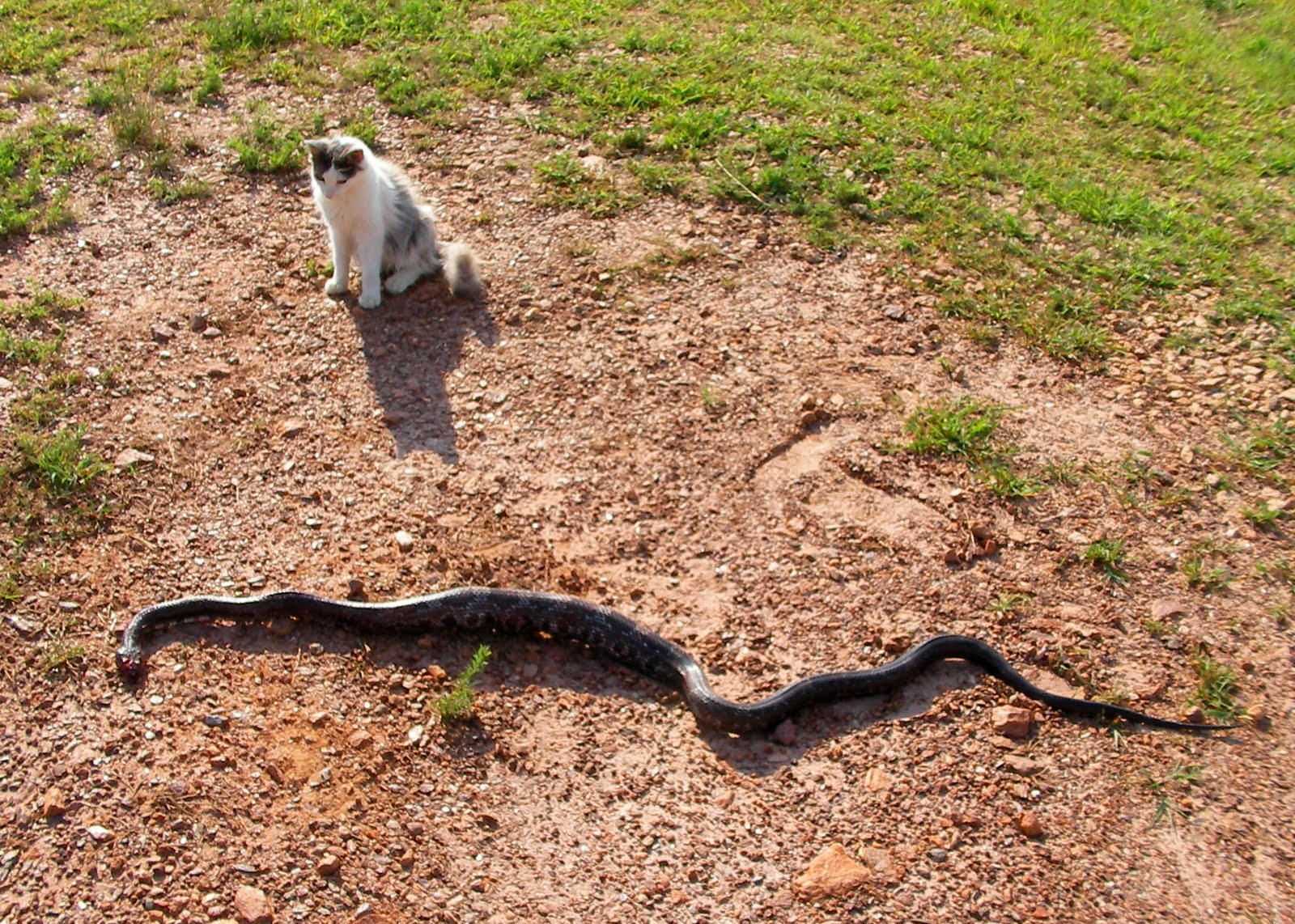 how to detect a snakes nest