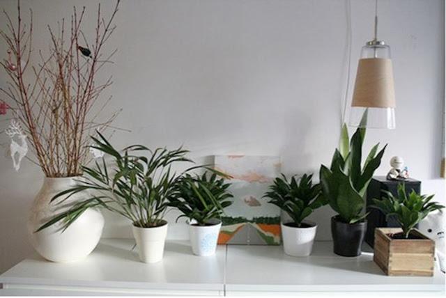 Fitorremediaci n del aire interior fitorremediacion - Plantas de interior purificadoras del aire del hogar ...