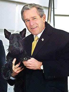 "Pet Pedia: President Bush with ""Scottish Terriers"""
