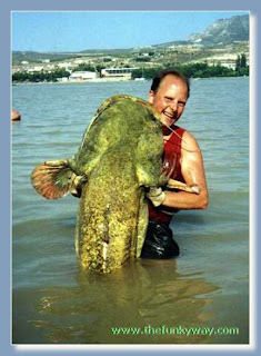 The Giant Cat Fish pictures gallery