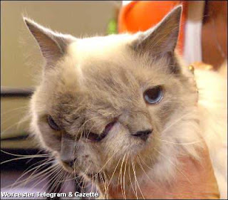 Two Faced Cat the animal phenomena pictures images photos pics gallery