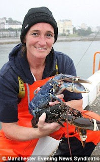 Rare Blue Lobster Found in The Isle of Man Island, England pictures pics photos images gallery