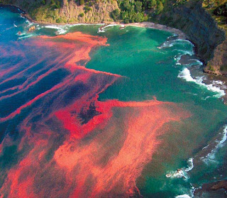 Red tide one of top wonder in the world in nature phenomena picture
