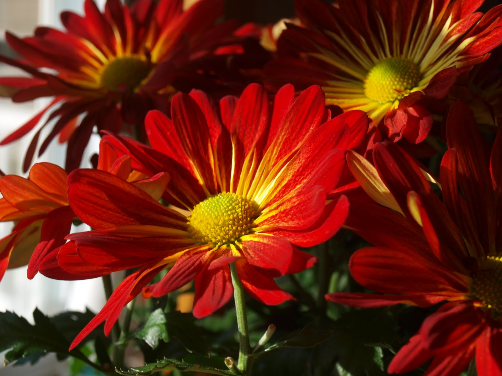 Good Morning Beautiful Flowers Pictures Beautiful Morning Flowers