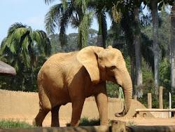 Amo todos os elefantes do mundo!!