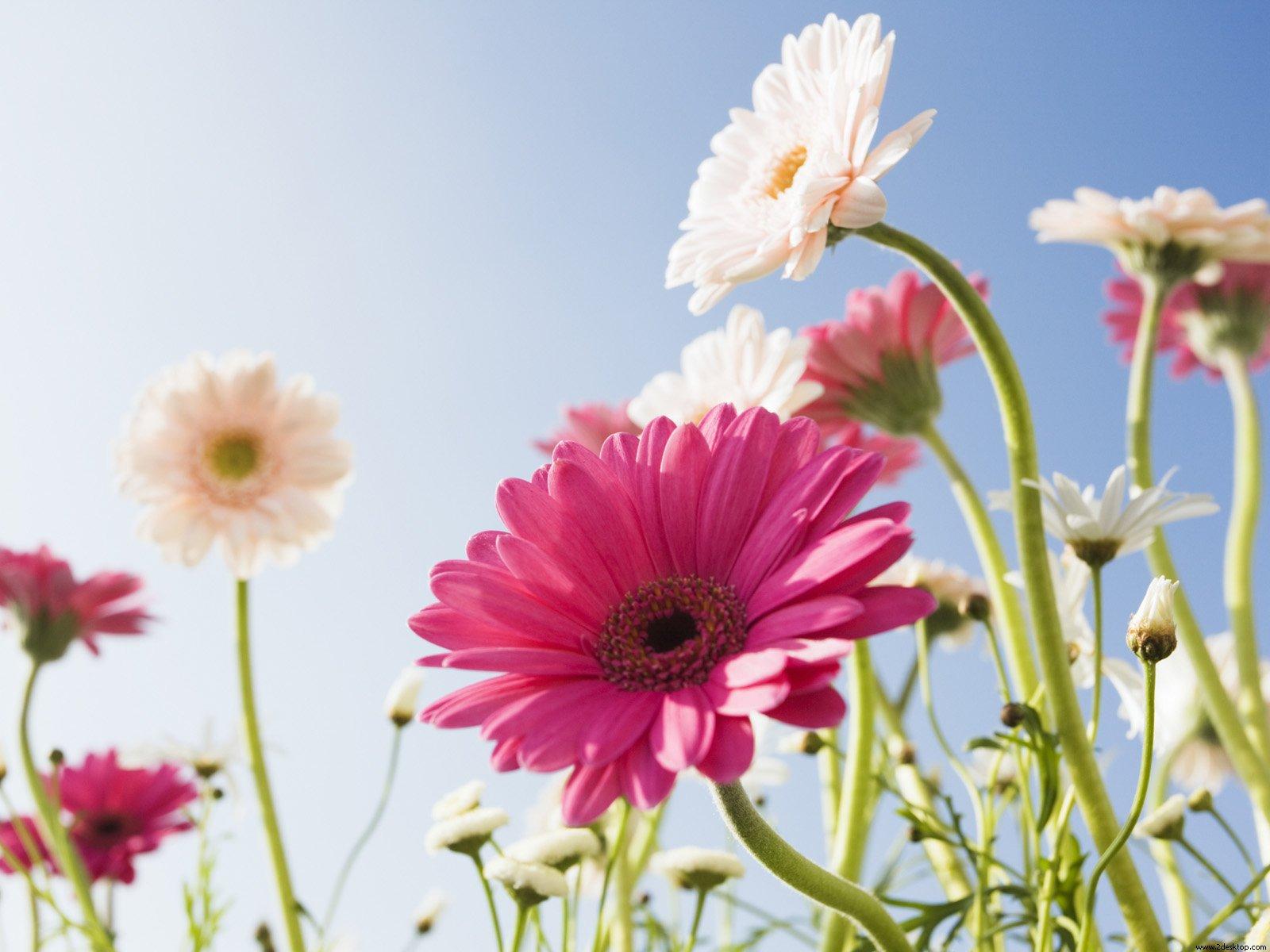 Imagenes Con Flores Naturales - Imágenes De Flores Hermosas Naturales Para Regalar