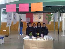 """Feria científica """"Las plantas"""" Primeros básicos"""
