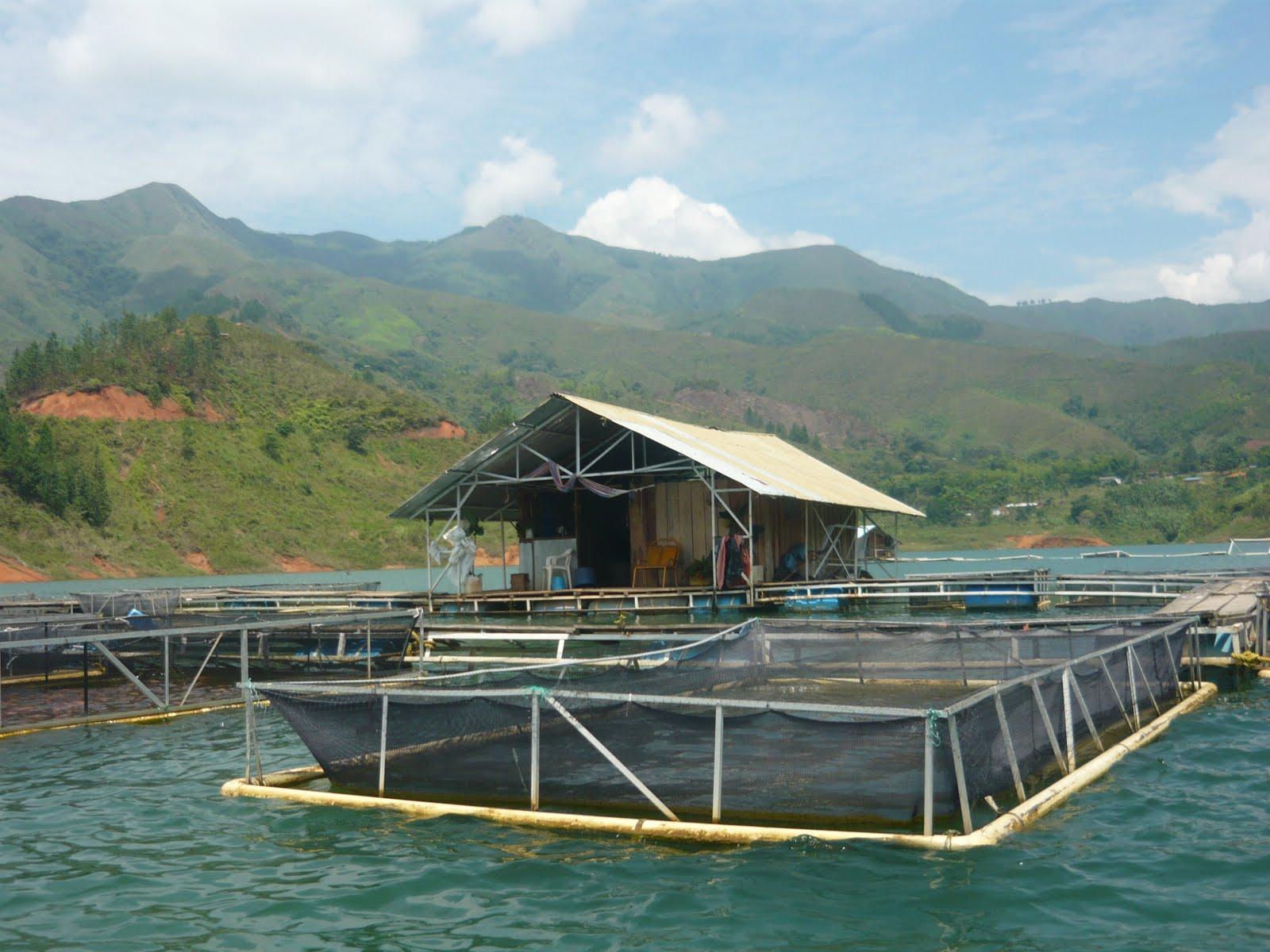 Visita embalse la salvajina parametros tecnicos for Jaulas flotantes para piscicultura