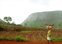 Angola rising angolan agriculture on the rebound