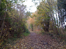 The Woods Near Whiteladies