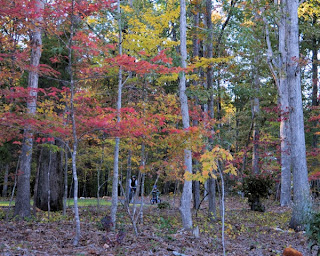 Fall Colors at Mary Hayes Barber Holmes Park