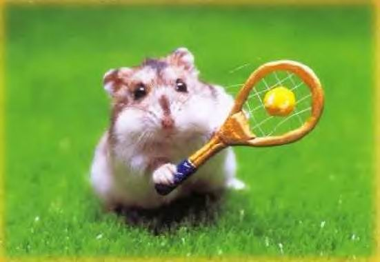 http://3.bp.blogspot.com/_syeard6vKxA/TCJXOttQbeI/AAAAAAAABmI/laufJAVy-sA/s1600/hamster-tennis.jpg