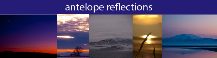 Antelope Reflections