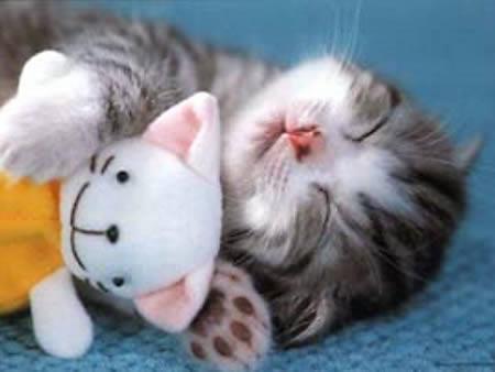 "I sleep all night and I sleep all day"". ""me too"""
