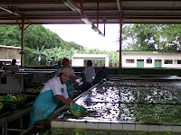 banana plantation packaging plant3 Photo Friday   Banana Plantation Packaging Plant in Limon Costa Rica