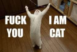 fu im cat
