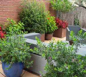 en primer lugar habr que decidir el aspecto que queremos dar al ambiente y el tipo de plantas que queremos podemos optar por un espacio con plantas de