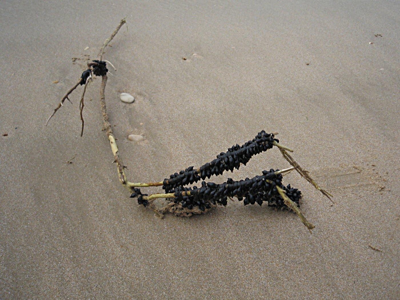 balades sur plages autour de l 39 ile de r sortie 6 rivedoux abbaye des ch teliers. Black Bedroom Furniture Sets. Home Design Ideas