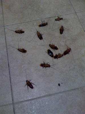 how to get rid of cockroaches in toilet