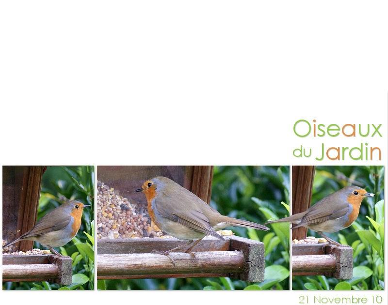 Digital scrap photos oiseaux du jardin rouge gorge for Jardin 4 moineaux