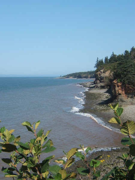 chipman's brook, bay of fundy